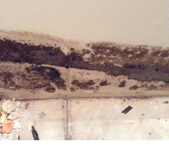 Removing Mold From Your Home Before