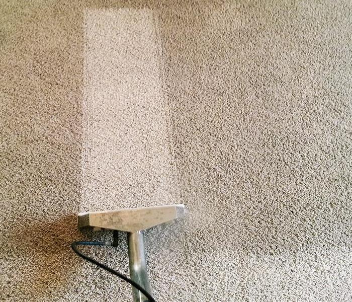 Professional Carpet Cleaning Bradenton After